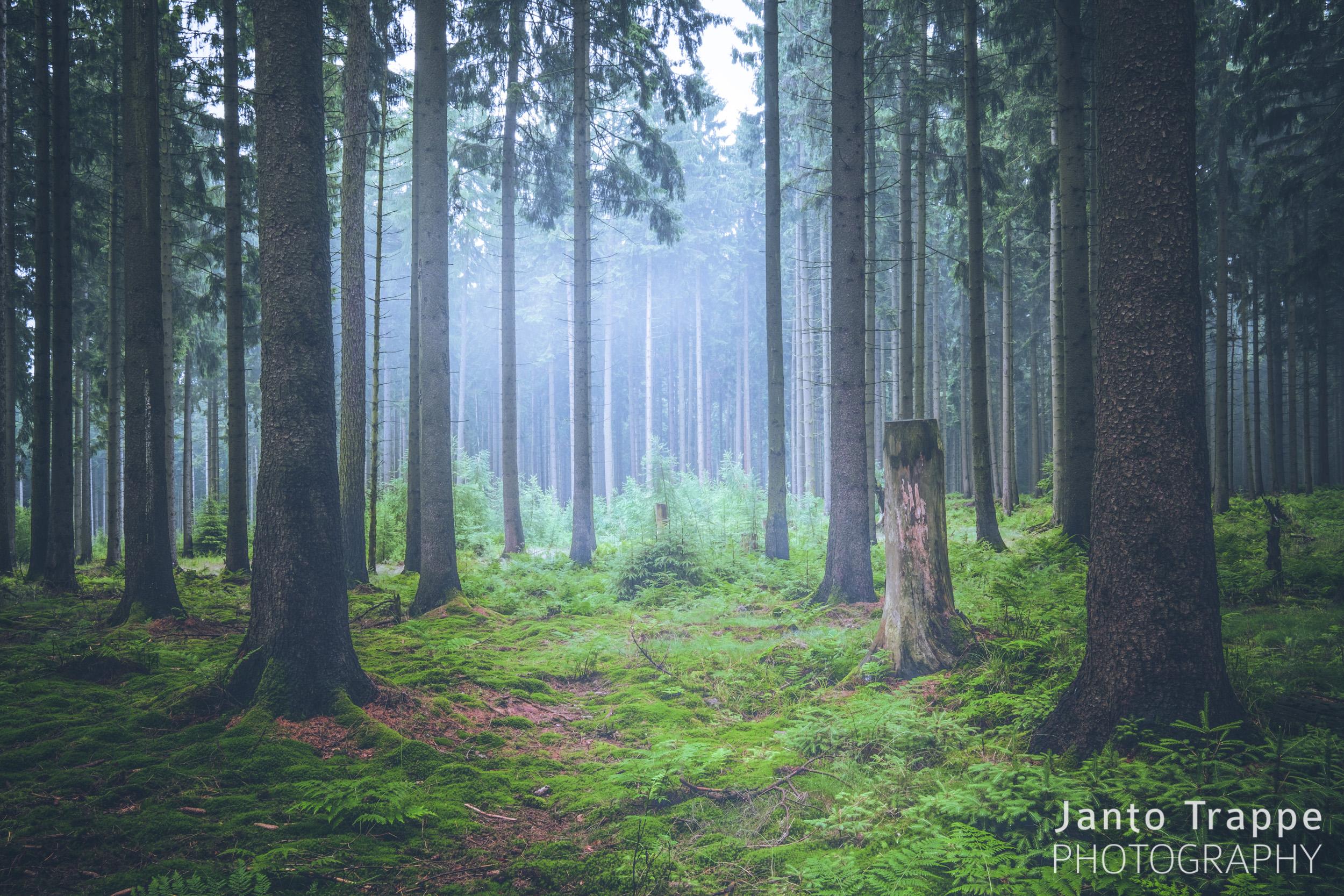 Landschaft - Janto Trappe - Fotograf Hannover